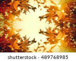 autumn foliage   leaves ... | Shutterstock . vector #489768985
