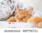 Cute Ginger Cat Lying In Bed...