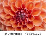 orange flower in macro view | Shutterstock . vector #489841129