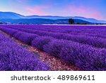 beautiful landscape of lavender ... | Shutterstock . vector #489869611