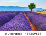 lavender field summer landscape ... | Shutterstock . vector #489869689