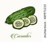 isolated cucumber in a sketch... | Shutterstock .eps vector #489971215