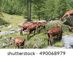 Goats In The Mountains Between...