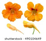 Nasturtium Flowers Isolated On...