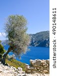 Small photo of Olive tree on the slope of the island in the Aegean Sea