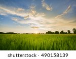 paddy field with sunrise | Shutterstock . vector #490158139