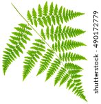 Leaf Fern Isolated On White...