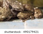 Small photo of A pack of young Common midwife toad, Alytes obstetricans waiting to leave the pond where it was born.