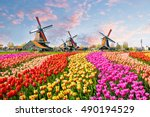 Stock photo landscape with tulips traditional dutch windmills and houses near the canal in zaanse schans 490194529