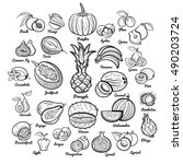 big fruits collection.... | Shutterstock .eps vector #490203724