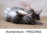 Stock photo small kitten playing at the table at home and looking at photographer 49022482