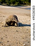 komodo dragon is coming to the...   Shutterstock . vector #49028383