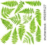 Images Set Leaves Fern Isolate...
