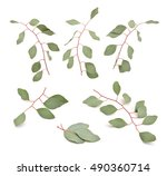 eucalyptus twigs. isolated set... | Shutterstock . vector #490360714