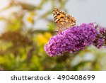 painted lady butterfly  vanessa ... | Shutterstock . vector #490408699