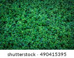 green leaves wall background  ... | Shutterstock . vector #490415395