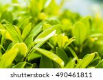 close up to green bush of... | Shutterstock . vector #490461811