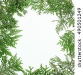 ever green fir tree decoration... | Shutterstock . vector #490501249