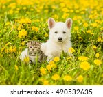 Stock photo puppy and kitten lying together on a dandelion field 490532635