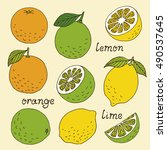citrus fruits hand drawn... | Shutterstock . vector #490537645