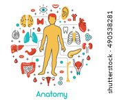 anatomy thin line vector icons... | Shutterstock .eps vector #490538281