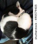 sleeping cat | Shutterstock . vector #490579405