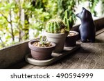 small cactus pots by the edge