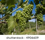 close up of grapes in a... | Shutterstock . vector #4906609