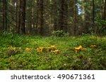 chanterelle | Shutterstock . vector #490671361