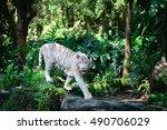white tiger walks in green... | Shutterstock . vector #490706029