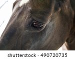 Horse Eye  Head Brown Horse