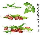 bean   phaseolus vulgaris ... | Shutterstock .eps vector #490866697
