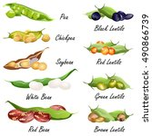 beans  common bean. pea ... | Shutterstock .eps vector #490866739