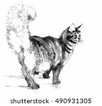black and white hand drawn cat... | Shutterstock .eps vector #490931305