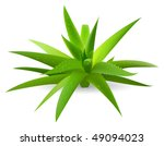 green aloe | Shutterstock .eps vector #49094023