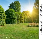Hedges And Ornamental Shrub In...