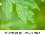green leaf with raindrops | Shutterstock . vector #491037865