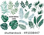 Stock vector vector tropical palm leaves jungle leaves split leaf philodendron leaves set isolated on white 491038447