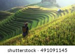 farmer in rice terrace vietnam   Shutterstock . vector #491091145