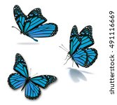 beautiful three blue monarch... | Shutterstock . vector #491116669