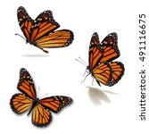 beautiful three monarch...   Shutterstock . vector #491116675