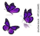 beautiful three purple monarch... | Shutterstock . vector #491116681
