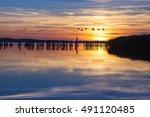 flock of cranes in flight at... | Shutterstock . vector #491120485