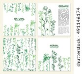 wild flowers and herbs  hand... | Shutterstock .eps vector #491146174