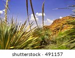 Yucca On Mount Franklin  In...