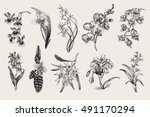 exotic orchid set. botanical... | Shutterstock .eps vector #491170294