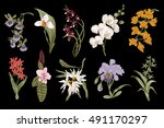 exotic orchid set. botanical... | Shutterstock .eps vector #491170297