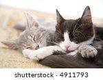 Stock photo sleeping kitten brothers 4911793