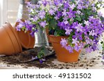 Tiny 'campanula get mee' (or bellflowers) in clay starter pots with spade and watering can.  Gardening still life with natural window light and shallow dof. - stock photo