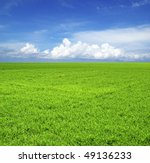 green field under blue sky | Shutterstock . vector #49136233